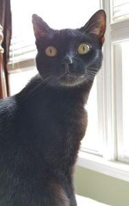 Drusilla, Studio Cat Extraordinaire